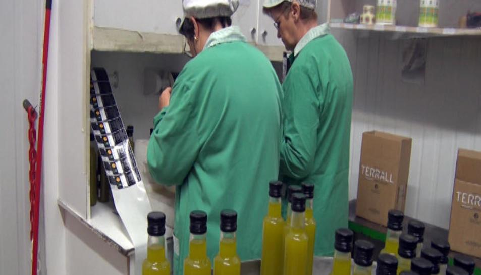 Inicio de la producción de aceite de oliva en Lleida.