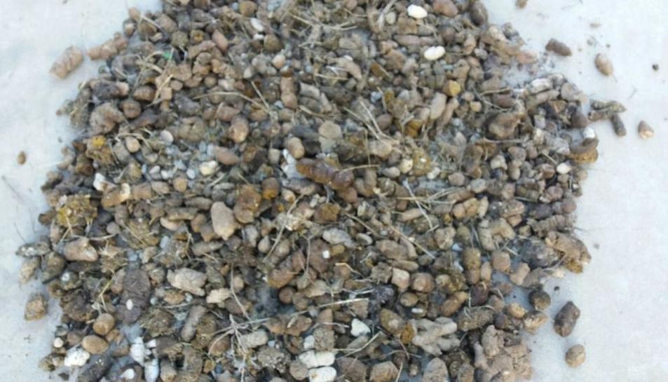 Imagen de los 10 kilos de heces recogidos en un tramo de vía.