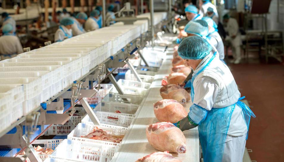 Cadena d'especejament de porcs a les instal·lacions de bonÀrea.