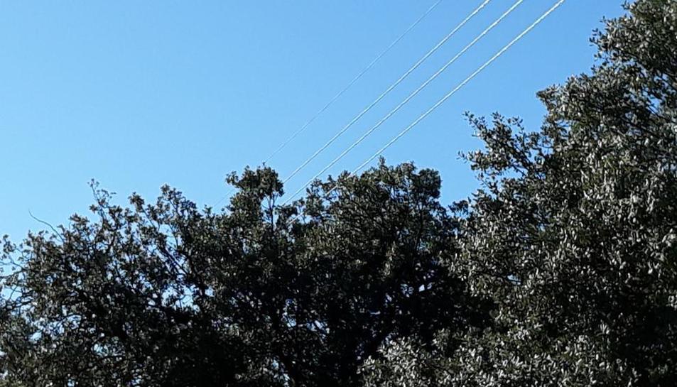 Cables de la llum passen al costat dels arbres de la urbanització.