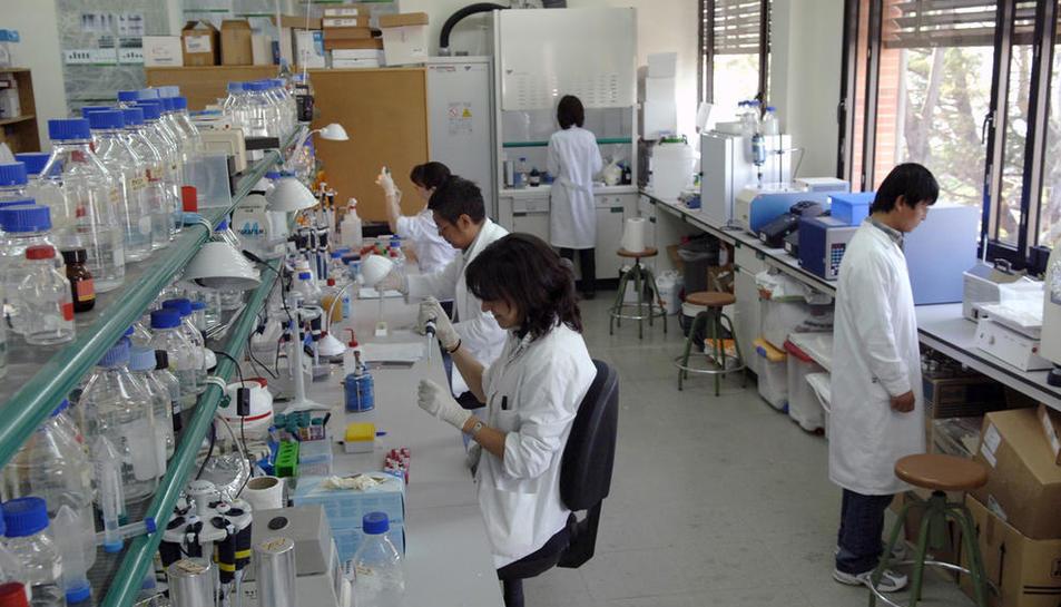 Investigadors treballant en un laboratori de la facultat d'Agrònoms de la Universitat de Lleida.
