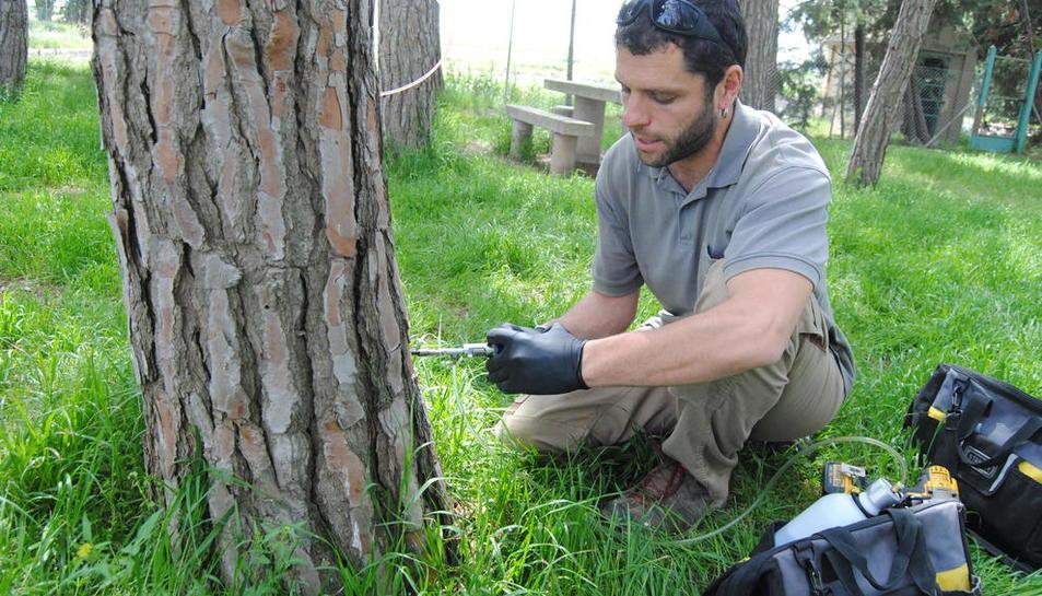 El tratamiento se lleva a cabo en cada árbol de forma individualizada.