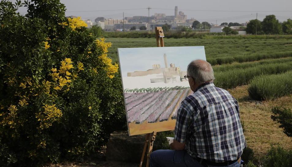 Concurso de pinturas con la Seu Vella como motivo  -  Aromes Rosselló organizó ayer un concurso de pintura que forma parte de una serie de actos para impulsar y dar a conocer los campos de lavanda  que hay en las afueras de la ciudad. El concurso ...