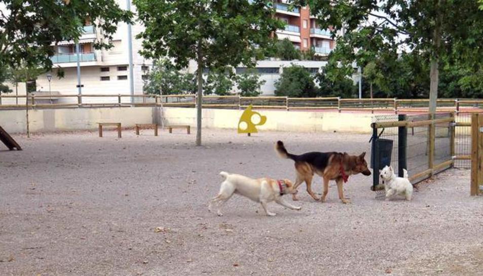 L'Ajuntament de Lleida obre l'àrea de gossos dels Jardins Jaume Magre