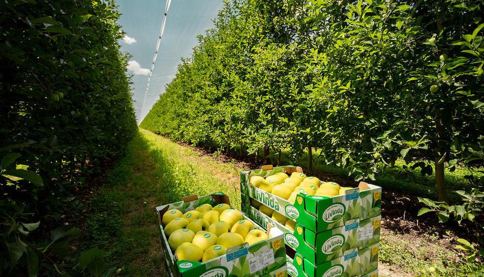 Nufri venderá un 10% de su fruta a través de la marca Livinda, con los estándares más altos de calidad.