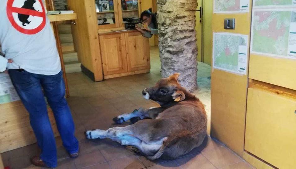 La acción de protesta ha tenido lugar en la oficina del Parque Natural del Alto Pirineo en Llavorsí.