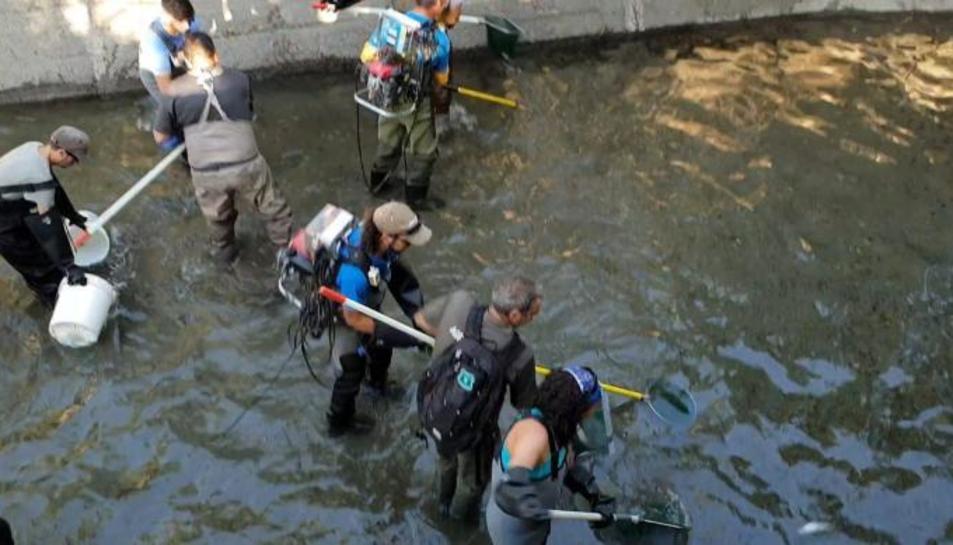 Operarios durante el rescate en el canal de Sossís.