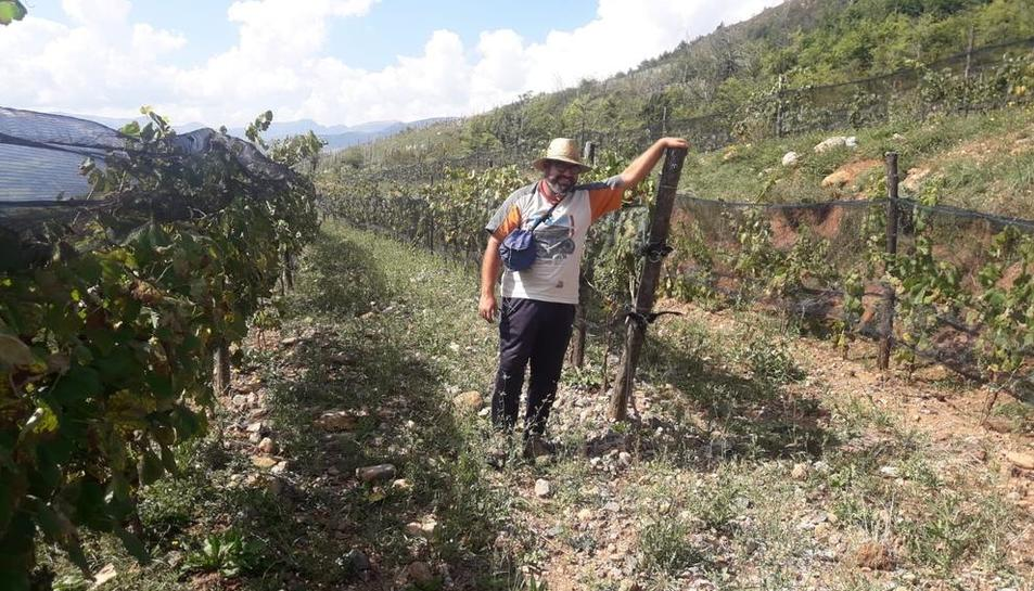Las 22.200 cepas están plantadas a 1.200 metros de altitud en Riu de Cerdanya.