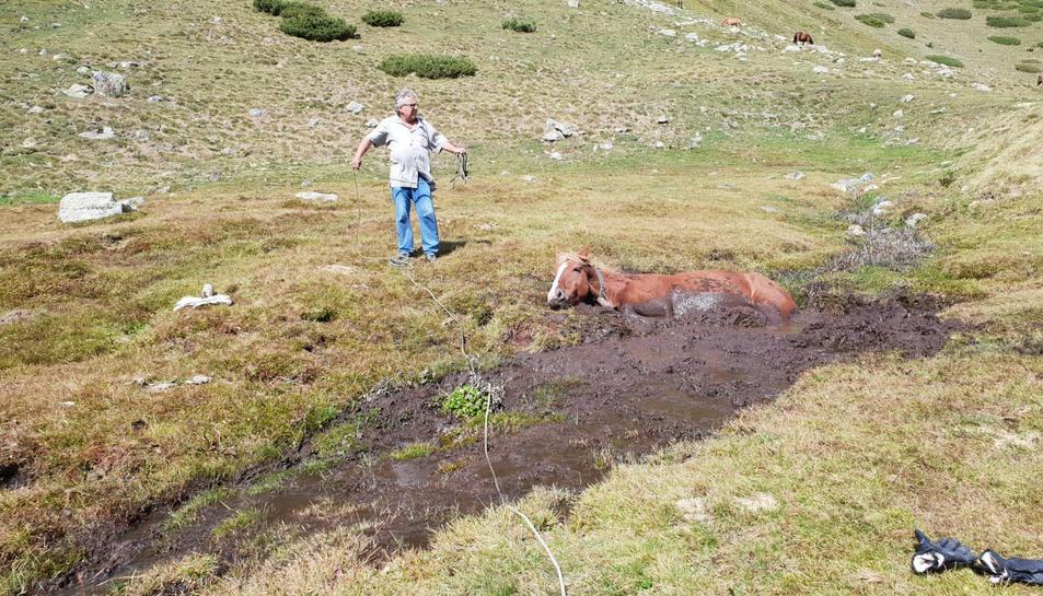 Rescaten una euga al Pallars Jussà