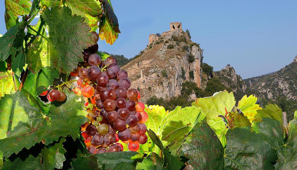 Els vins actuals. El celler acaba de crear Rubiòls. Els seus predecessors són SòlsXarel i Flor Xarel.