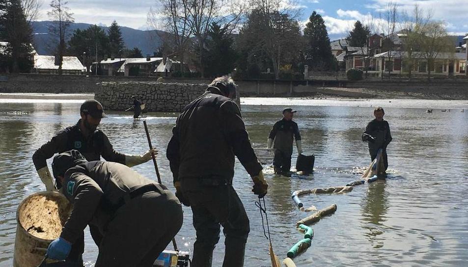 Els tècnics i els rurals van extreure ahir carpes del llac.