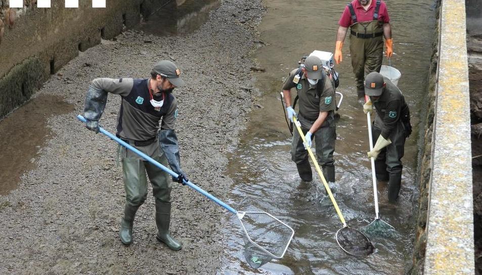 Rurals al rescatar els peixos.