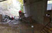 Los Rurales capturan dos perros asilvestrados en Conca de Dalt