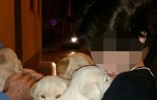 Els Rurals investiguen enverinaments de gossos a Almenar i Alfarràs