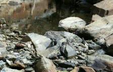 Los Agentes Rurales denuncian a Endesa por secar un río en Lladorre