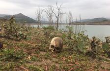 Bassella hará un osario común para enterrar los huesos hallados en Rialb