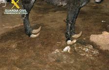 Denuncien el mal estat d'equins i gossos a Juneda