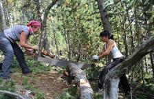 Més de 200 voluntaris per a la gestió sostenible de boscos