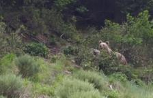 Detenido al matar un oso en Naturland