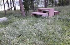 Un tram del sender entorn de Cellers, inutilitzat per l'herba