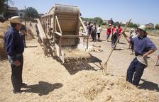 La Fuliola ampliarà les festes del Segar i el Batre amb una nova jornada a la tardor per sembrar el blat