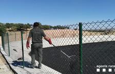 Rescaten cinc milans atrapats en una bassa de purins a Preixens