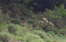 Multa de 6.000 euros a Naturlandia por el oso abatido