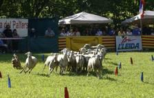 Els gossos d'atura reuneixen dos mil persones a Llavorsí