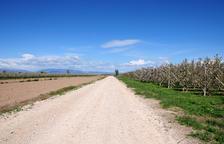 El Palau reforma els camins del terme municipal