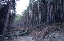 Agricultura millora boscos de Vilaller per obrir senders i evitar incendis