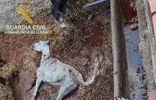 Detenido por dejar morir dos caballos en Menàrguens