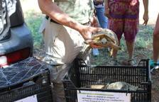 Liberadas 30 tortugas mediterráneas en Bovera