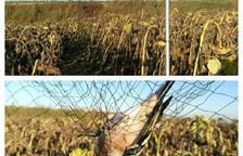 Multes per capturar ocells il·legalment a Bell-lloc