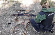 Decomissen dos rifles i un cabirol a un caçador a la Baronia de Rialb