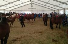 Unos 100 ejemplares participan en el concurso del Cavall Pirinenc