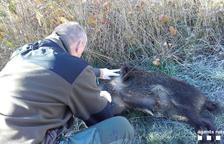 Analitzen animals a l'Alta Ribagorça per evitar epidèmies