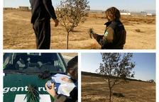 Denunciado por capturar pájaros fringílidos en Agramunt
