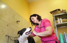 """Laura Gregori: """"Als gossos se'ls contagia l'energia. Com menys paraules, millor"""""""