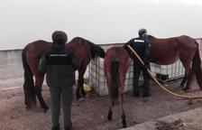 Torres de Segre obre expedient a l'home que va abandonar 8 cavalls