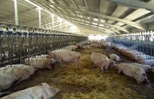 Ganaderos cortan la C-14 en Ponts contra la limitación o veto a nuevas granjas