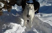 Aran suspèn la temporada de caça deu dies abans a causa de l'acumulació de neu