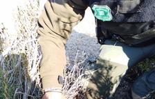 Denunciats dos caçadors en un control dels Rurals als Torms