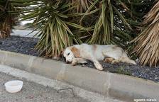 Rescatan a un perro atropellado en Corbins