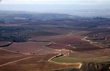 Mil reserves per veure el 'mar rosa' de fruiters d'Aitona