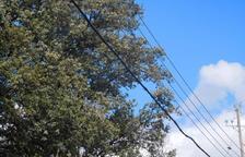 Denunciada una elèctrica a Àger per tenir uns cables a prop de la vegetació