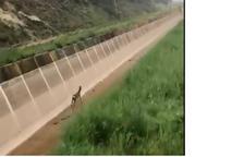 Vista de l'animal rescatat pels Rurals a Camarasa.