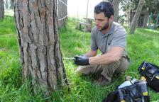 El tractament es porta a terme a cada arbre de forma individualitzada.