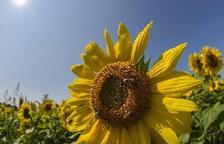 Bruselas da luz verde a restringir pesticidas dañinos para las abejas