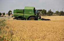 Imagen de archivo de cosecha de cereales en una finca de la Segarra.