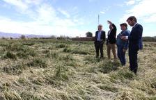 Una vintena de municipis estudien demanar zona catastròfica per pedra